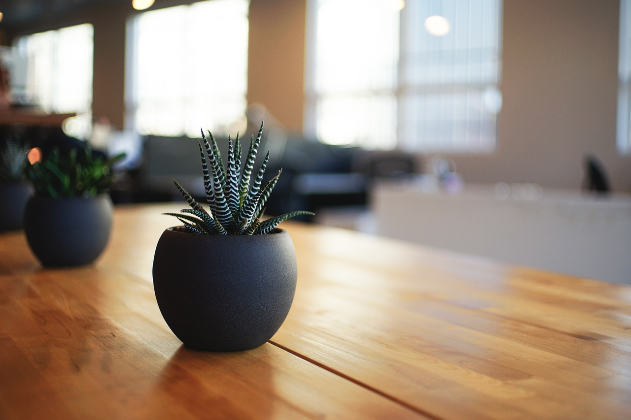 Can plants alleviate 'Sick Building Syndrome'?