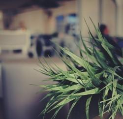plants aid noise reduction