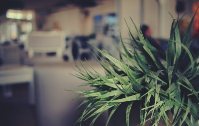 plants can reduce noise in a building or office