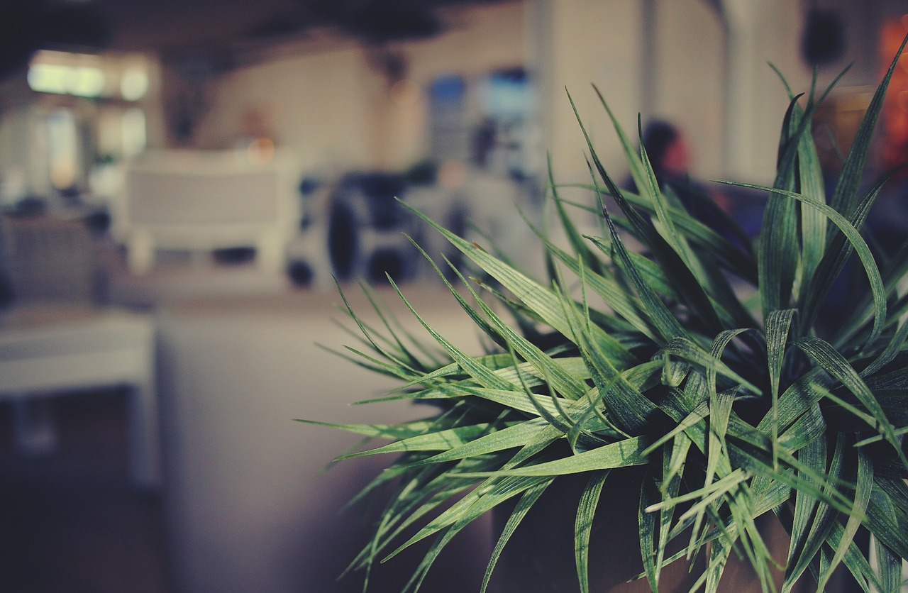 Can plant help reduce noise in your office?